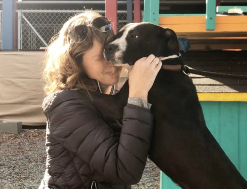 Know These Things Before Adopting Your Next Dog From The Shelter