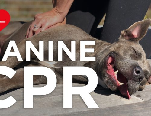 Canine CPR: What You Must Know