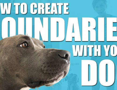 How To Create Boundaries With Your Dog