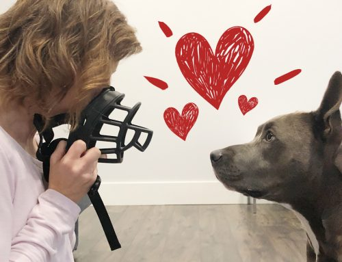 How To Get Your Dog To Love The Muzzle