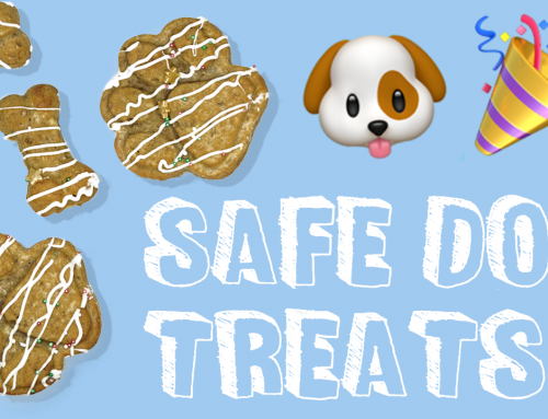 Baking A Safe Birthday Treat for Your Dog