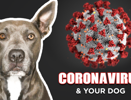 Coronavirus & Your Dog: The Most Popular Questions Answered