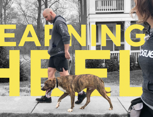 Teach Your Dog To Heel: The Basics To Getting Started