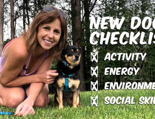 New Dog Checklist: Choosing Your Next Dog