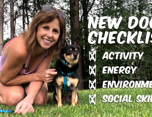 New Dog Checklist: Choosing Your Next Dog