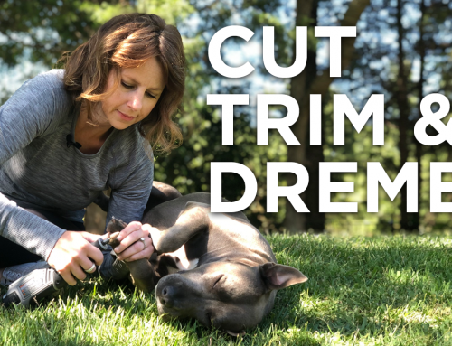 How To Correctly Cut, Trim & Dremel Your Dog's Nails
