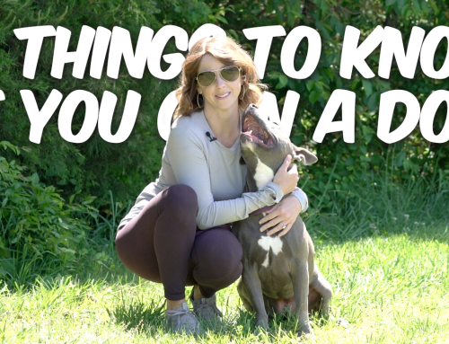 10 Things You Should Know If You Own A Dog