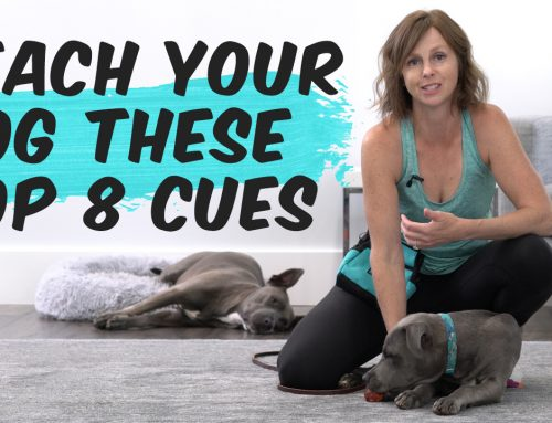 Raise A Well-Behaved Dog: How To Teach The Top 8 Cues (Commands) To Your Dog or Puppy