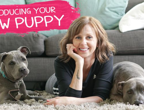 How To Introduce Your New Puppy To Other Dogs
