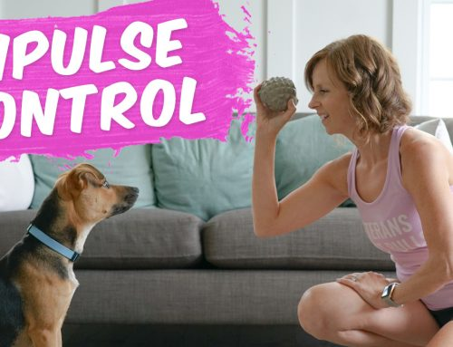 Impulse Control Drills For Your Dog: How To Teach Your Puppy Impulse Control