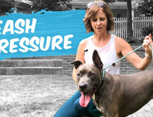 Loose Leash Exercise: Teach Your Dog to Avoid Tension and Pulling