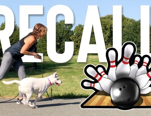 Easy & Fun Way To Improve Your Dogs Recall: Bowling For Treats