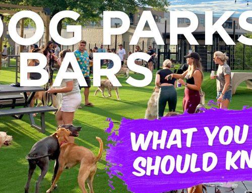 Dog Parks & Dog Bars: Set Your Dog Up For Success