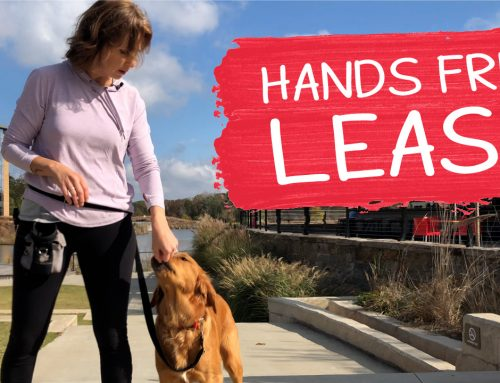 How To Correctly Use A Hands-Free Leash