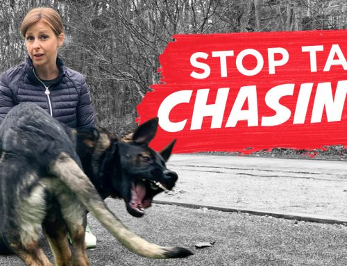 How To Stop Your Dog From Chasing Their Tail