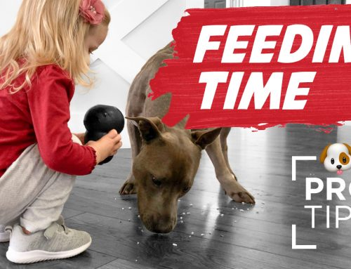 Feeding Time: 10 Fun Ways to Feed Your Dog for Improving Behavior