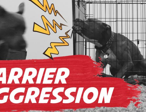 How To Fix Barrier Aggression In Dogs